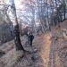Salendo nello splendido bosco