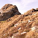 Gipfelzahn des Tristkogels