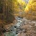 Herbstlicher Lärchenwald