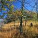 hohes Gras überdeckt die Pfadspur häufig