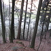 Fast der gesamte Aufstieg ist im Walde.