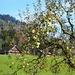 Herbstimpressionen unterhalb Furth im Neckertal