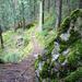 Schöner Wanderweg kurz vor Kandersteg