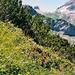 Ein herrlicher Bergweg in prächtiger Vegetation.