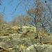 der kuriose Steg...der Bau einer Stützmauer wäre hier offenbar zu aufwendig gewesen