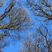 Obwohl immer noch Herbst haben die Bäume ihre Blätter schon verloren... hoffentlich kommt der Frühling bald!