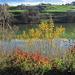 Herbstfarben am Gübsensee.