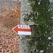 Hungriger Baum: In den 2 Jahren und 5 Monaten, die seit [http://www.hikr.org/gallery/photo56716.html dieser] Aufnahme vergangen sind, hat er schon wieder einen ganzen Buchstaben verspeist.  En Guete!