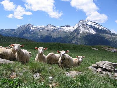All'Alpe Calvaresc Desora