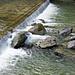Trumschweli (Flussverbauung) in der jungen Emme