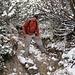 Der Abstieg zum Hirschtalsattel vollzieht sich durch Latschengassen, die vom Gestrüpp der Legföhren streckenweise dachartig zugewachsen sind.