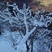Addobbi di neve [The snow decorates the landscape]