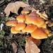farbig strahlt der Herbst - in Bodennähe