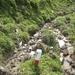 beliebter Wanderweg - besonders bei Kühen