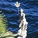 Neptun wacht über dem italienischen Teil des Lago Maggiore