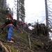 Tree - climbing 1
