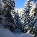 Oberhalb der Wanderhütte beim P.599m wurde es nun eindeutig winterlich - und das schon Ende November unterhalb 1000m!