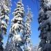 Im prächtiger Winterwald. Die Landschft wurde mit jedem Höhenmeter immer schöner. Das Foto ist vom Pass P.798m zwischen dem Kohlberg und dem Le Petit Donon.