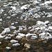 Schön herausgeputzte Steine