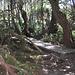 Weg durch den urwüchsigen Wald