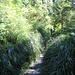 meterhohes Grass säumt den Weg zum Botanical Beach