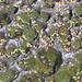 jeder Stein und jeder kleine Tümpel sind besiedelt
