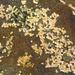 Organismen siedeln überall - Botanical Beach auf Vancouver Island