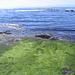 begrünter Strandabschnitt - ziemlich glitschig
