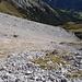 wir hatten eine völlig kletterfreie Abstiegsvariante entdeckt; sie liegt etwas westlicher der Normalaufstiegsroute. Der Schutt macht aber nur runter Spaß!