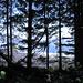 der Wald hat uns wieder - Blick zurück zum Strand