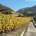 Les belles couleurs des vignes en automne (Villeneuve)