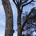 Agujeros excavados en el árbol por un pájaro carpintero o picapinos