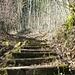 Durch die steilen, bewaldeten Osthänge des Chomberges, die Dättnauer Berg genannt werden, führt eine Treppe aufs Gipfelplateau.
