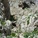 Nach der ersten Klettereinlage folgt einfaches Bachgelände schluchtaufwärts