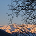 the tree limbs and the mountains