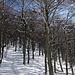 Attraversiamo l'ultimo boschetto che ci separa dal Monte Ferraro...