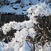auch hier erzeugen die winterlichen Temperaturen arktische Blumenbilder
