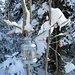 ... und mit Liebe und Geschick wird der Waldweg zum Waldweihnachtsweg ...