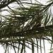 Palmbätterwirrwarr