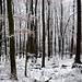 Winter im Deister