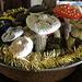 warm mushroom