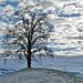 Oberhalb Brandishub. Baum 4