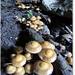 Ciupercute la intrarea in pestera