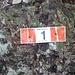 <b>Sul lato sinistro inizia il percorso, segnalato con frecce verdi disegnate sui tronchi delle piante. Corrisponde al sentiero no. 1 della Via dei Monti Lariani</b>.