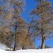 Wintersport-Idylle... ;-) (noch nervender als der Anblick der Schneekanonen war deren permanente Geräuschkulisse)