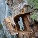 Una cornice... di legno