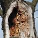 arg verwundet, dieser Baum - und böte so einen perfekten Platz für eine Adventskerze
