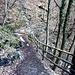 Sentiero/stradina ben attrezzato tra Alpe del Vicerè e Patrizi