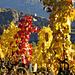 ....und nochmals intensivste Herbstfarben