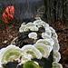 Ränkespiel der Pilze. Unten auf dem Weg mein treuer Begleiter, der Regenschirm